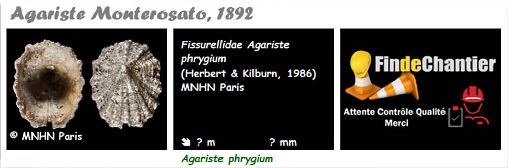 Emarginulinae Agariste - Le genre, l'espèce, la planche Agaris10