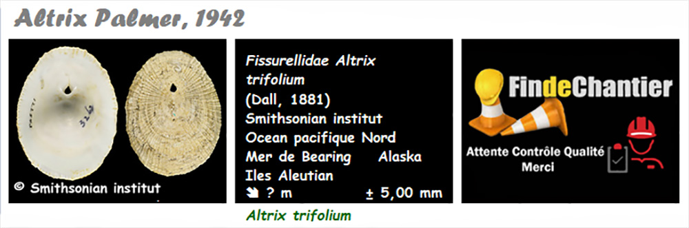 Emarginulinae Altrix - Le genre, l'espèce, la planche Altrix10