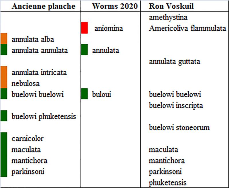 Olividae Annulatoliva - Discussion sur le genre Annula10