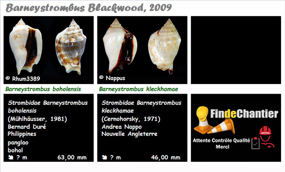 Strombidae Barneystrombus - Le genre, ses espèces, la planche Barney10