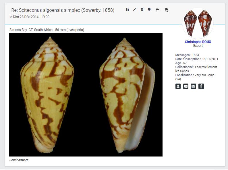 Conus (Floraconus) algoensis simplex (Sowerby I, 1858) voir Conus (Sciteconus) algoensis Conus_44