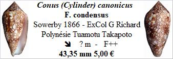 Conus_canonicus_condensus Conus_78