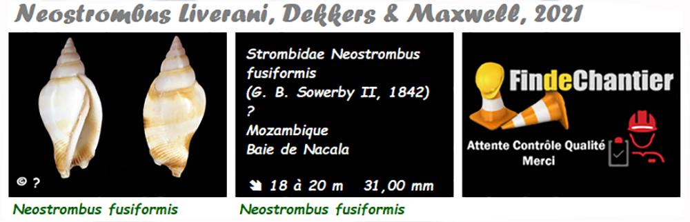 Strombidae Neostrombus - Le genre, l'espèce, la planche Neostr11