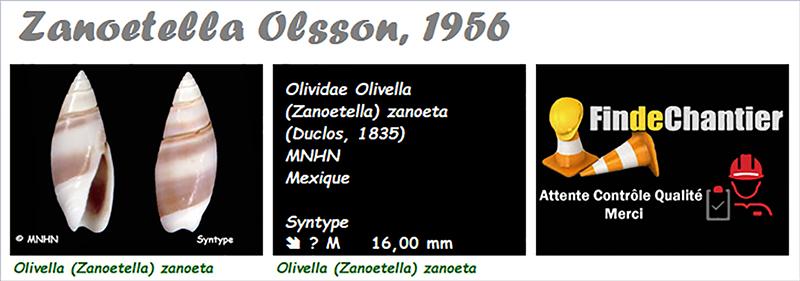 Olividae Olivella - Le genre, les espèces, la planche Olivel31