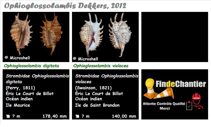 Strombidae Ophioglossolambis - Le genre, ses espèces, la planche Ophiog10