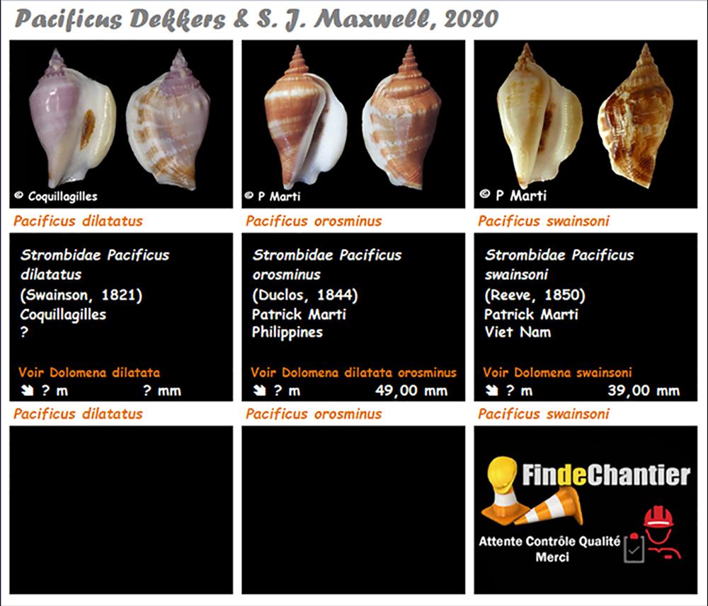 Strombidae Pacificus  - Le genre, ses espèces, la planche Pacifi10