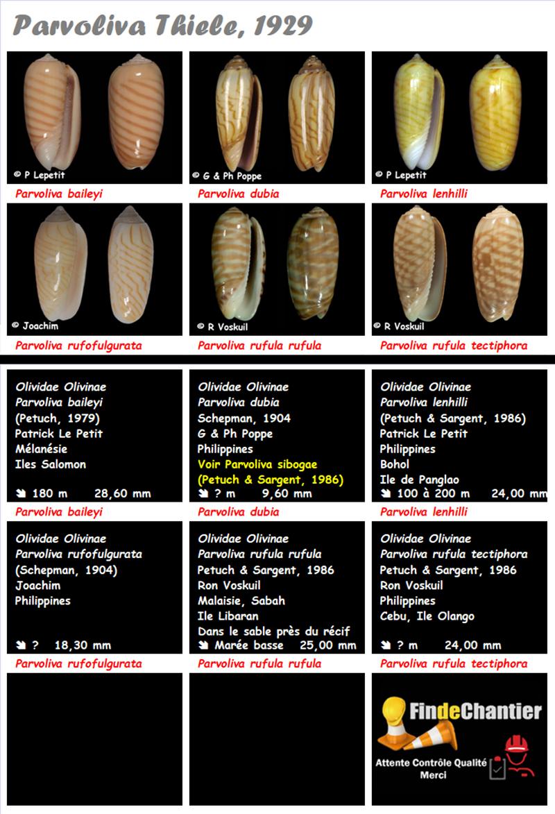 Olividae Parvoliva - Le genre, ses espèces, la planche Parvol11
