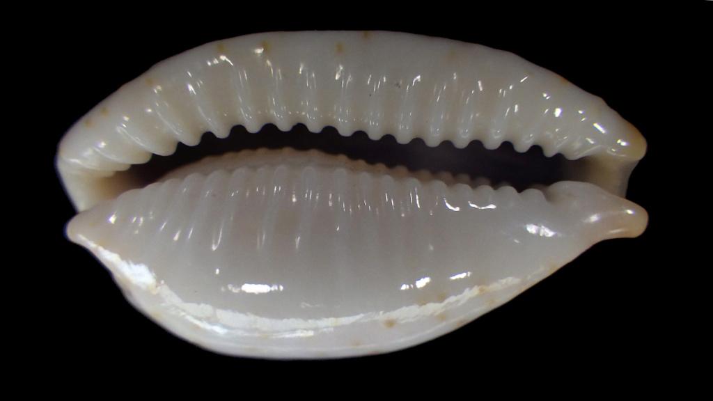 Achetées pour Bistolida stolida aureliae avec tout le doute que ça comporte Rimg9020