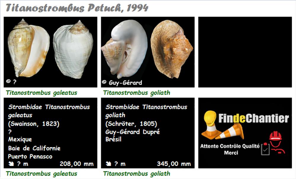 Strombidae Titanostrombus  - Le genre, ses espèces, la planche Titano10