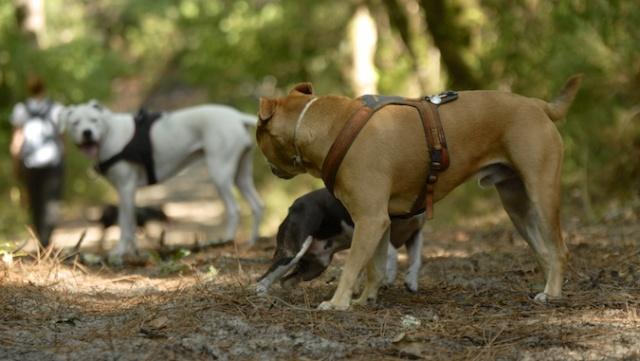 Esprit Canin 33 - Nadine Chastang _dsc0810