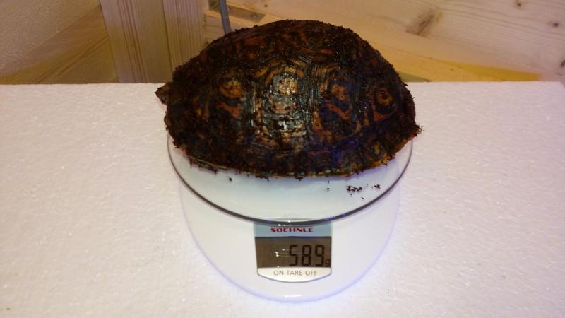 Présentation de ma rhinoclemmys pulcherrima manni Img_2025