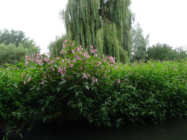 hortillonnages d'Amiens 20_bal10