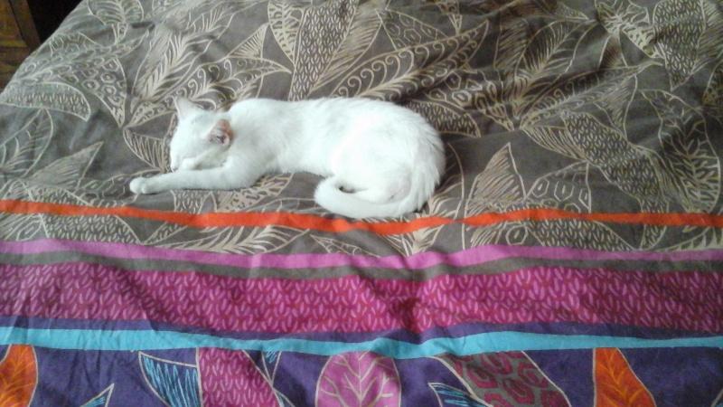 FLOCON, adorable petit coeur de 3 mois 20150710