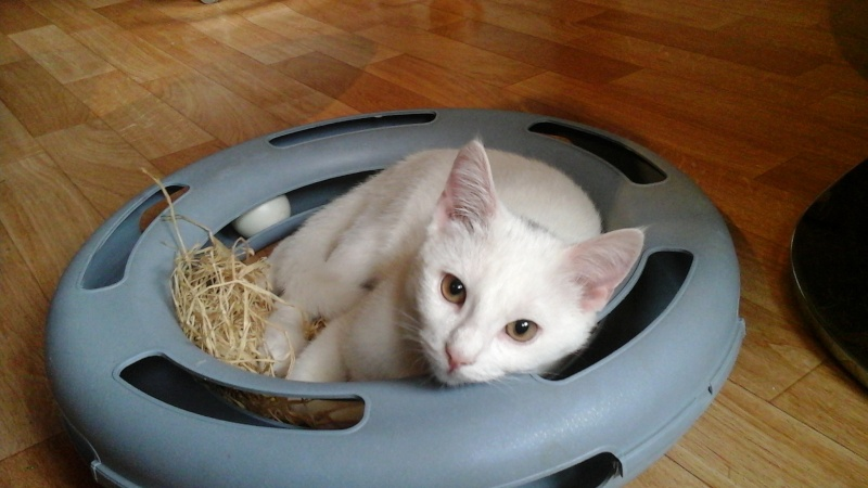 FLOCON, adorable petit coeur de 3 mois 20150712