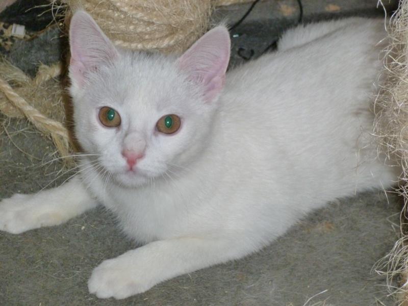 FLOCON, adorable petit coeur de 3 mois P1010714
