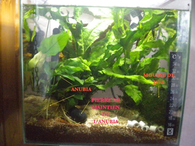 plantes pour petit espace Aquapl10