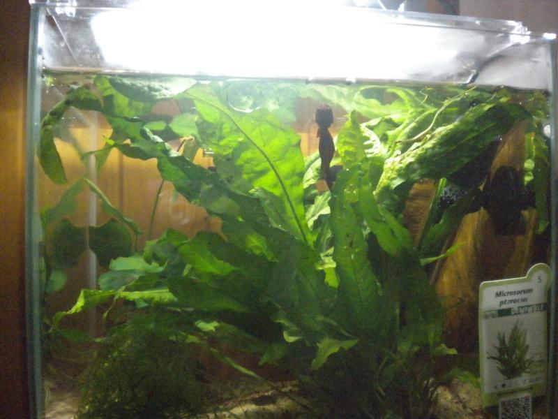 plantes pour petit espace Dscn4712