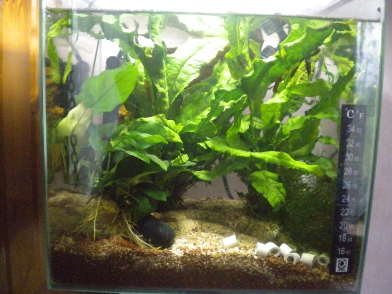 plantes pour petit espace Dscn4713