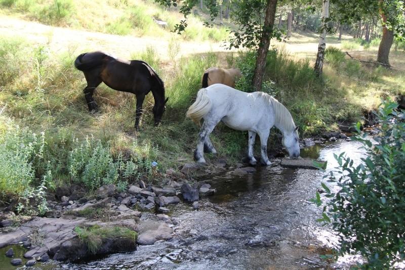 Camping le Galier Saint Alban sur Limagnole (48) Img_9511