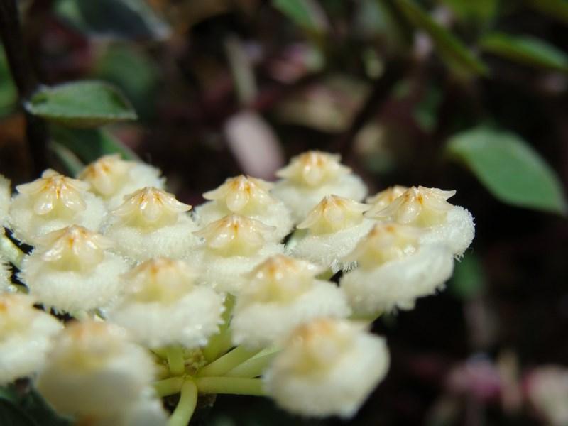 Blüten 2015 - Seite 2 H_l_gp13