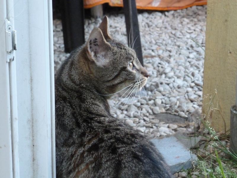 Sora, petite tigresse avec des chaussettes - ADOPTÉE P1080810
