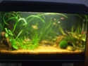Changer le sol d'un aqua cyclé Dscf8310