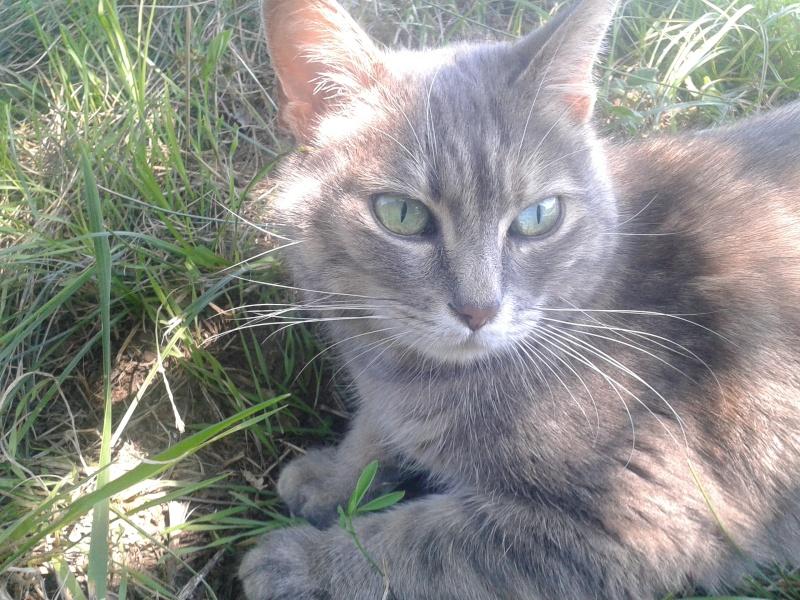 Grisette, femelle tigrée grise et fauve, née le 1er janvier 2011 - Page 4 20150810