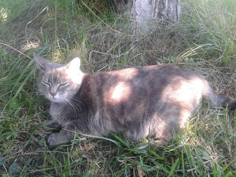 Grisette, femelle tigrée grise et fauve, née le 1er janvier 2011 - Page 4 20150811