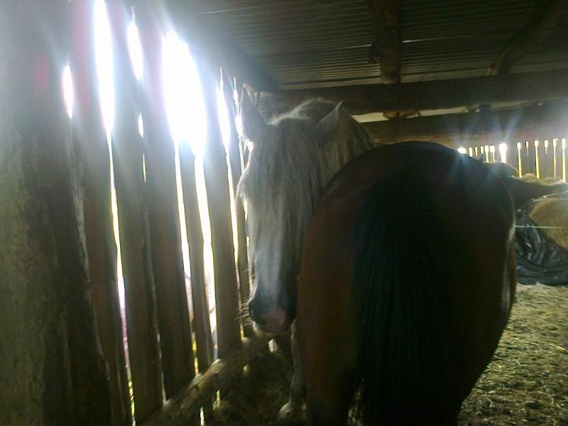chevaux et chaleur Photo066