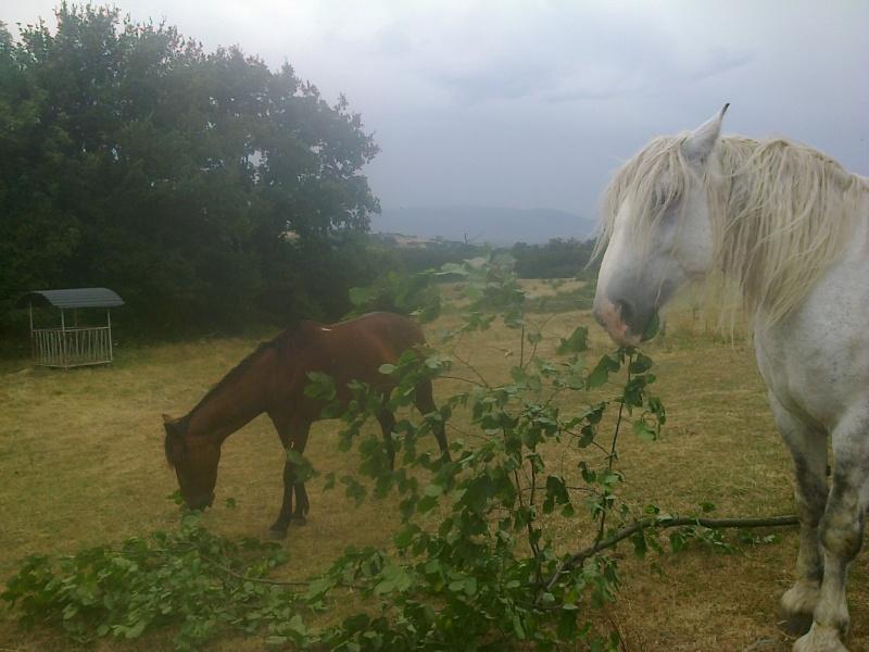 chevaux et chaleur Photo069