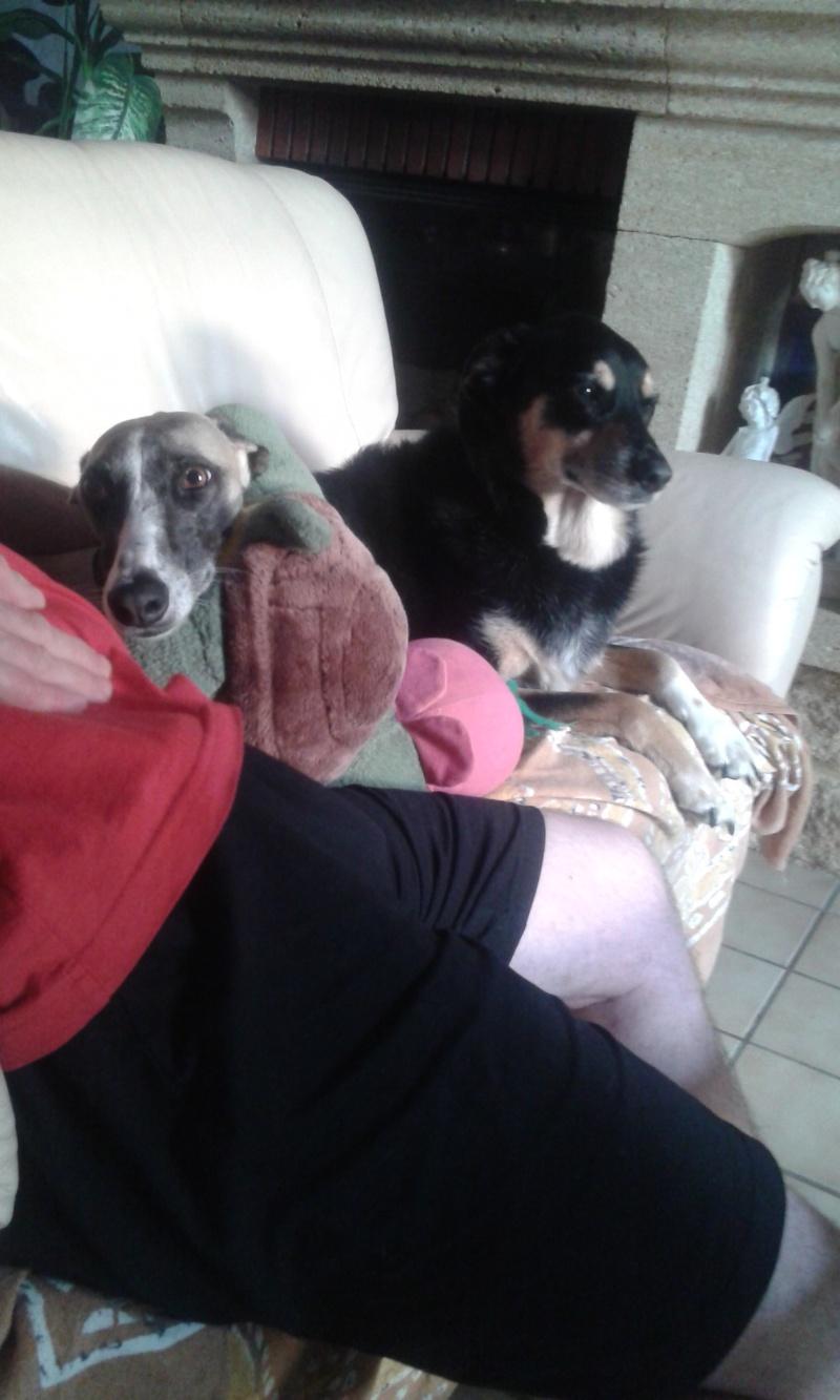 Perla , (squelettique) magnifique galga Scooby France   ADOPTEE  - Page 10 20150610