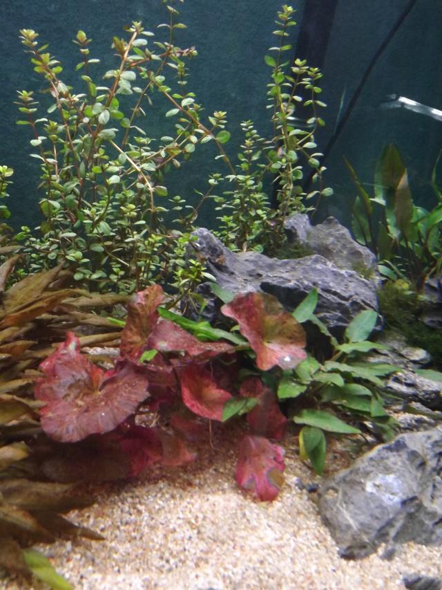 osaka 260 poisson japonais Dscf4213