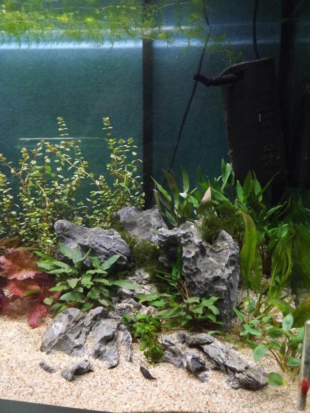 osaka 260 poisson japonais Dscf4214