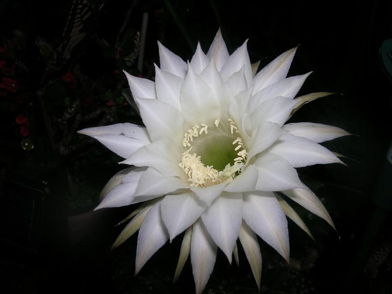 Kakteen Bilder  Kaktus10