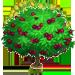 Vous cherchez un arbre ? Venez cliquer ici !!! Almond13