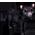 Panthère Noire Blackp11