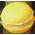 Citronnier Lemonm10