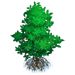 Vous cherchez un arbre ? Venez cliquer ici !!! Mangro14