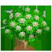 Vous cherchez un arbre ? Venez cliquer ici !!! Plumer17