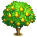 Vous cherchez un arbre ? Venez cliquer ici !!! Quince15