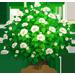 Vous cherchez un arbre ? Venez cliquer ici !!! Whitec12