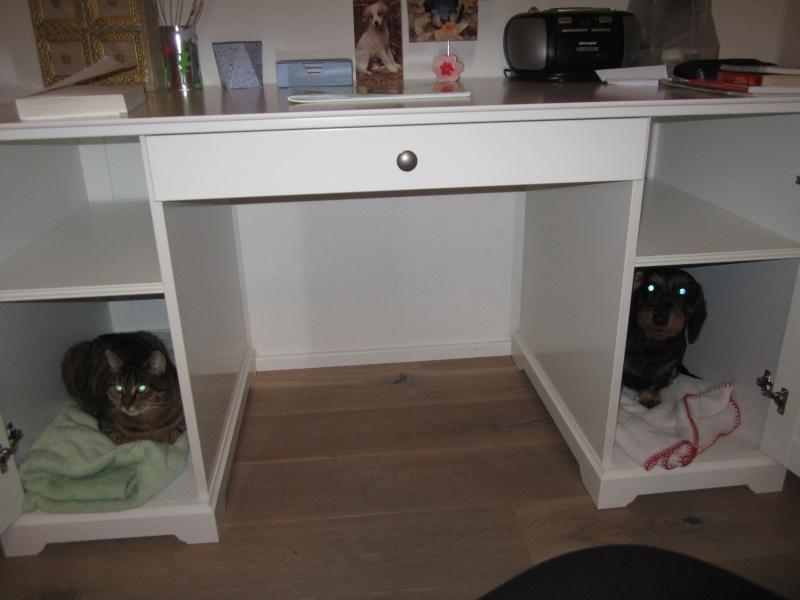 Un bureau pour tous en toutou confort =) Img_3411