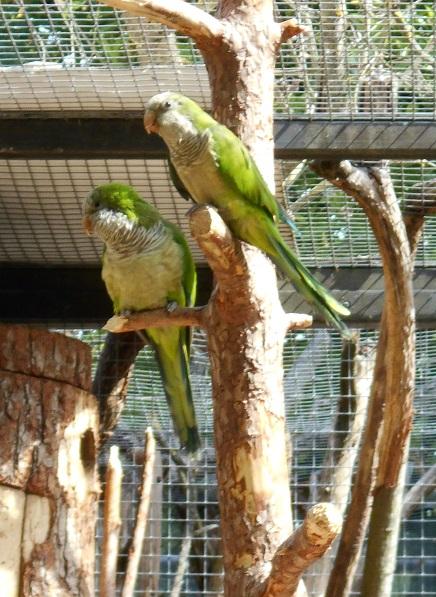 Parc aux oiseaux (Villars les Dombes) Conure11