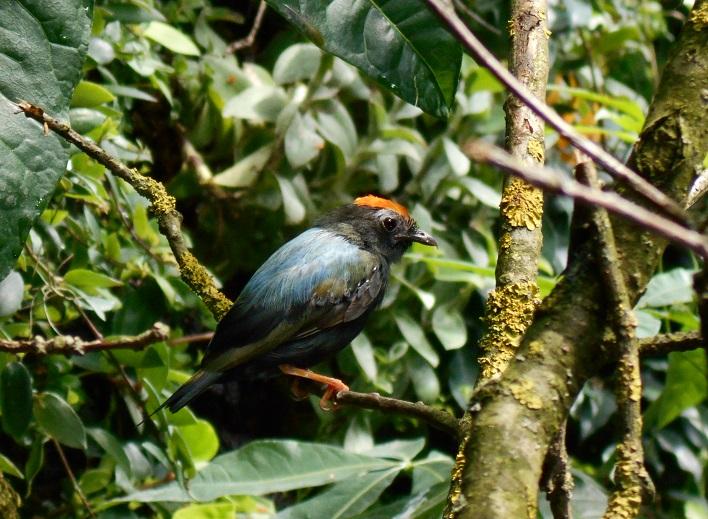 Parc aux oiseaux (Villars les Dombes) Inconn11