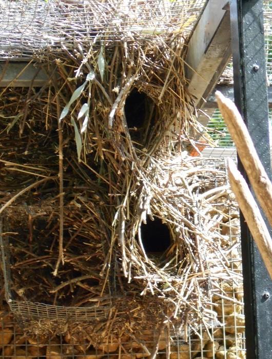 Parc aux oiseaux (Villars les Dombes) Nid_co11