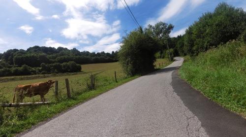 La frontière Namuroise vers la France Vache_10