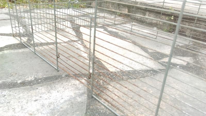 Donne grande cage RP Imag0012