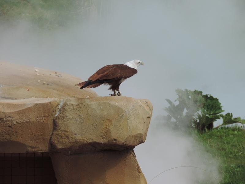 Zoo de Beauval Dscn5917