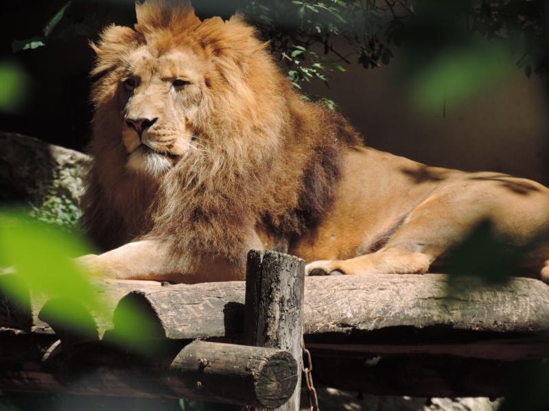Zoo de Beauval Dscn5918