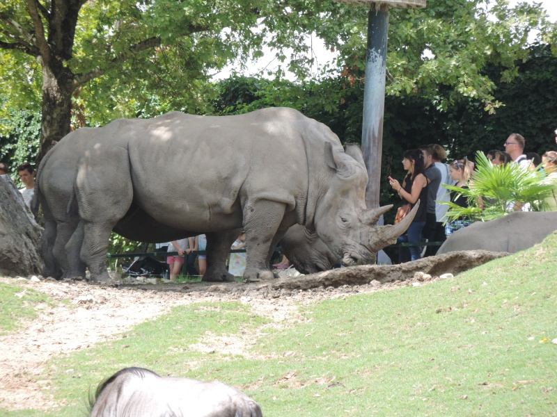 Zoo de Beauval Dscn5920
